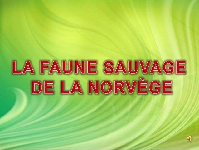 De nombreuses espèces d'animaux sauvages vivent en Norvège:  Les prédateurs  Les oiseaux  Les mammifères marins  Les g...
