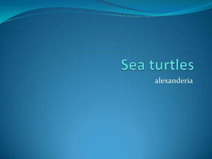 Sea turtles<br />alexanderia<br />
