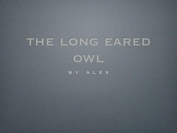 the long eared     owl    b y   a l e x