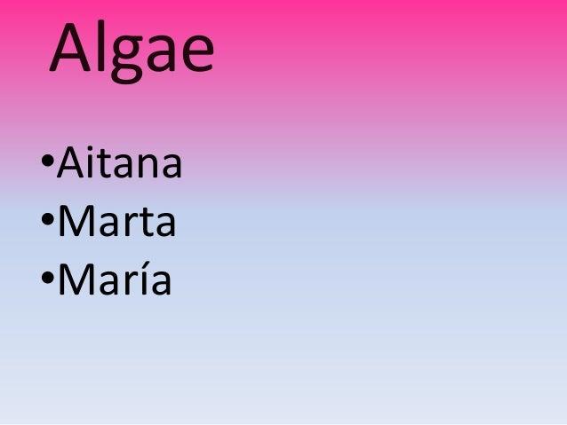 Algae•Aitana•Marta•María