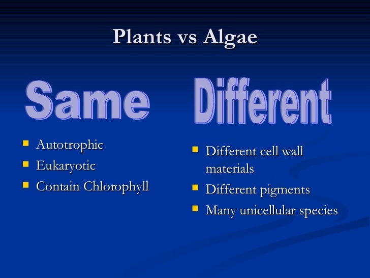 the differences in the net productivity of the phytoplankton and macro algae Macroalgae are simpler, and attach themselves to the seabed with a holdfast   most organizations group algae by their primary color (green, red,   phytoplankton come in many different structures, but all except for cyanobacteria  are algae  if sunlight is limited, phytoplankton productivity will decrease.