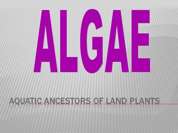 Ealand Algae Notes Bio 11