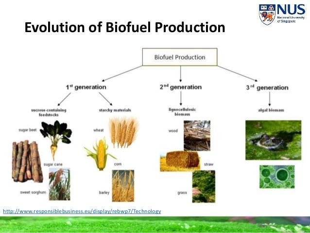 Algae Biofuels