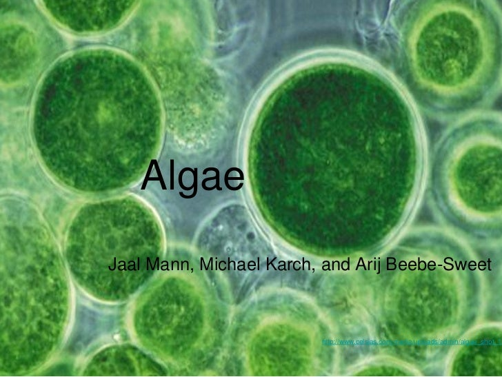 Challenges to Algae Use as a Biofuel