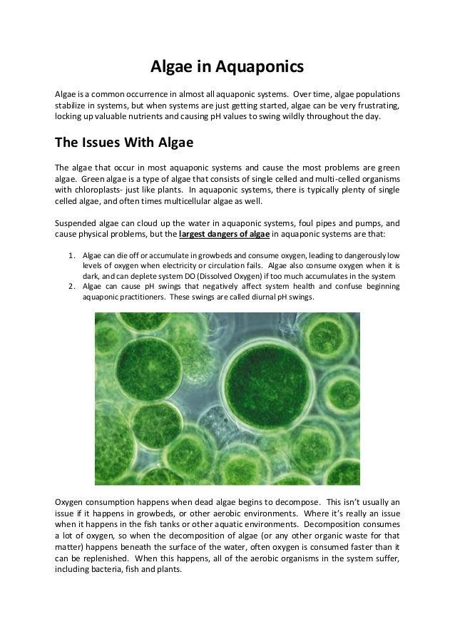 Algae Treatment in Aquaponics
