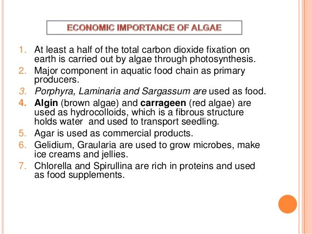 ecological and economical importance of algae Diatoms (class bacillariophyta) unlike most algae, though  diatoms have major economic importance in industry while also having a major role in biological and.