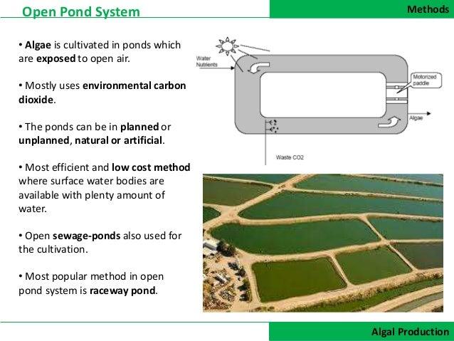 Algal Production For Biofuel