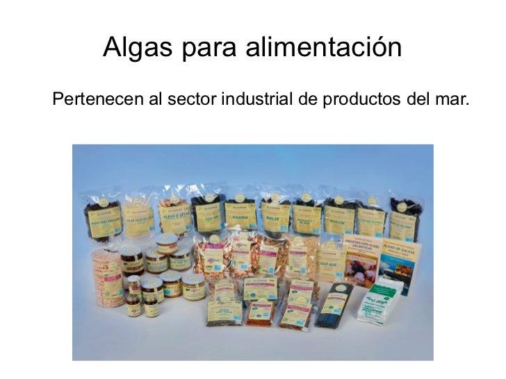 Algas para alimentación <ul><ul><li>Pertenecen al sector industrial de productos del mar. </li></ul></ul>
