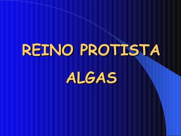 REINO PROTISTA    ALGAS