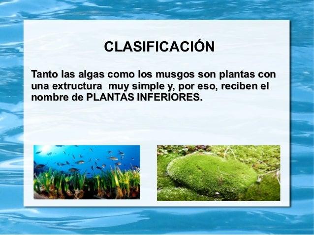 algas y musgos