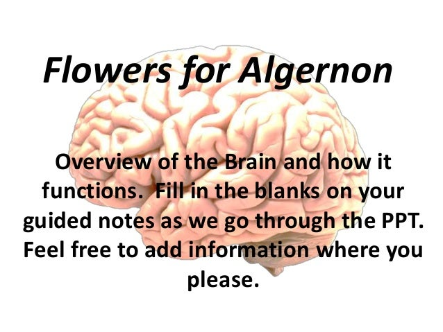 flowers for algernon research paper