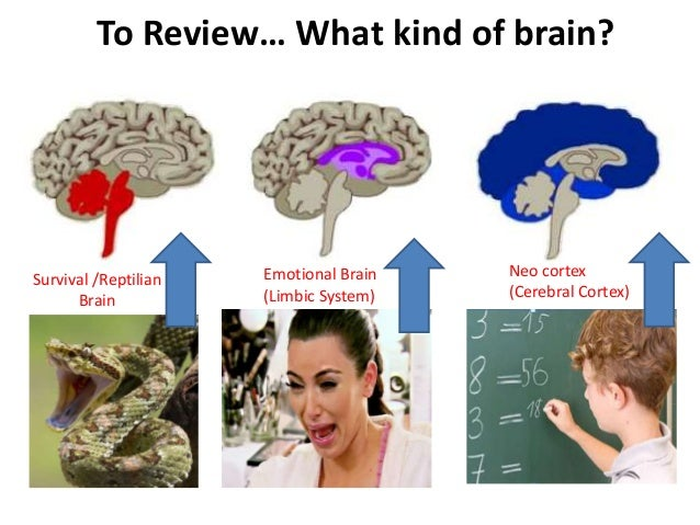 an analysis of the origin and purpose of the reptilian brain in human evolution Philip lieberman's central interest is the nature summary of human language and our reptilian brain: essential elements in analysis of the evolution of human.