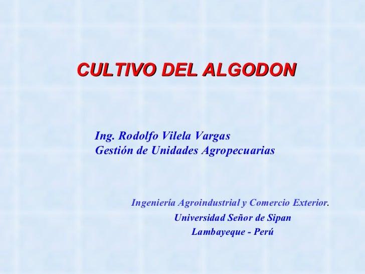 CULTIVO DEL ALGODON Ingeniería Agroindustrial y Comercio Exterior .   Universidad Señor de Sipan Lambayeque - Perú Ing. Ro...