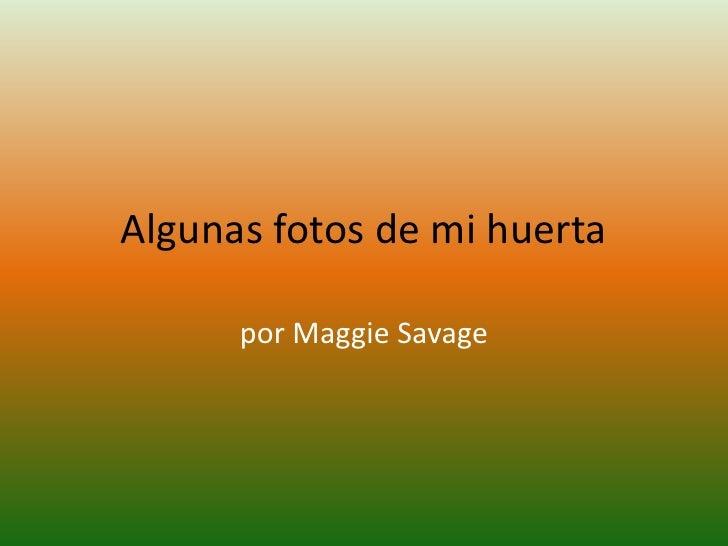 Algunas fotos de mi huerta<br />por Maggie Savage<br />