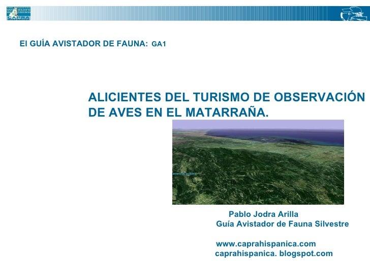El GUÍA AVISTADOR DE FAUNA:   GA1  Pablo Jodra Arilla  Guía Avistador de Fauna Silvestre www.caprahispanica.com caprahispa...