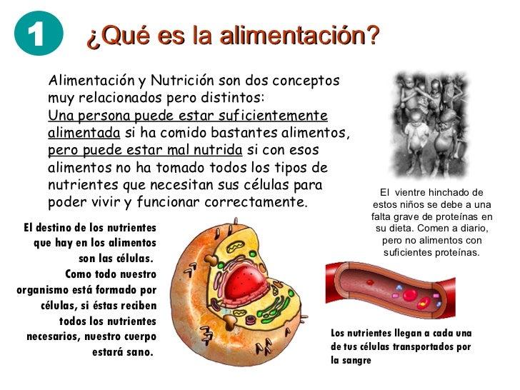 Alimentacion definision y imagenes for Dieta definicion