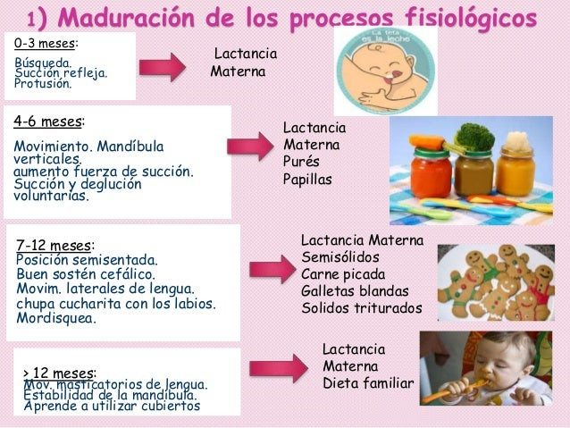 Alimentacion complementaria original - Pures bebes 6 meses ...