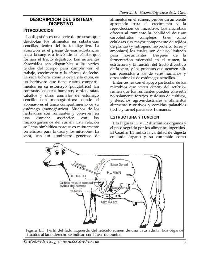 Del Sistema Digestivo de la Vaca Digestivo de la Vaca