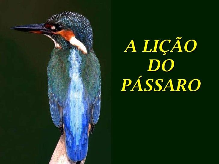 A lição do pássaro!