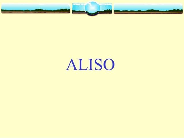 Aliso  alnus acuminata