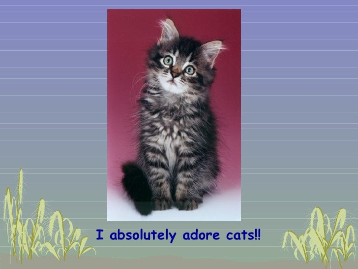 <ul><li>I absolutely adore cats!!   </li></ul>