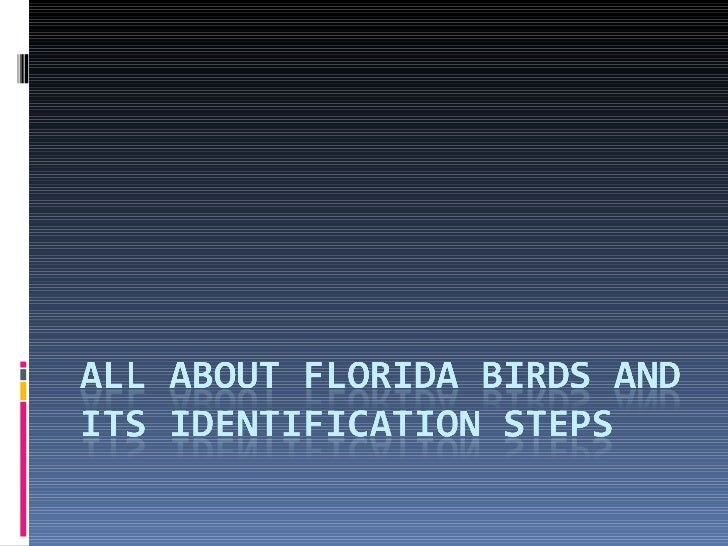 All about Florida birds and its identification steps