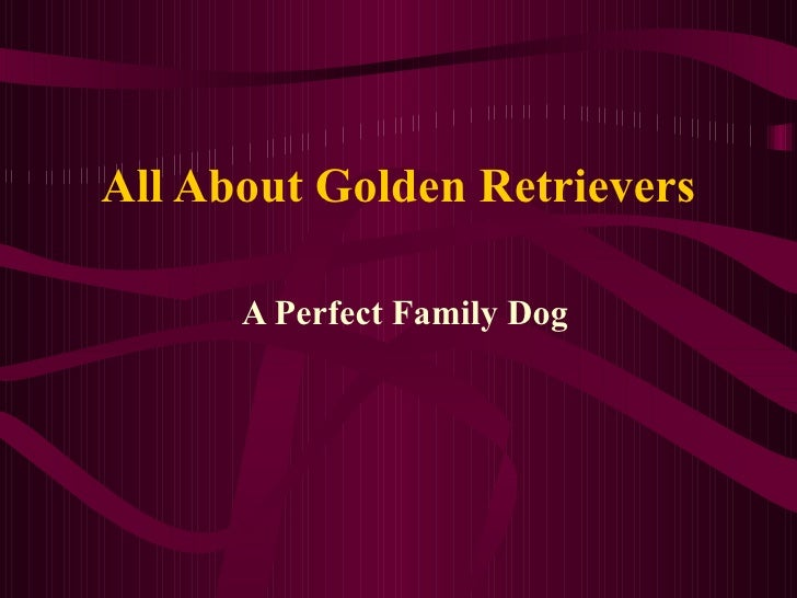 All About Golden Retrievers A Perfect Family Dog