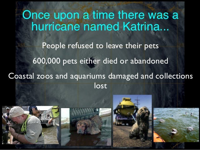 Once upon a time there was a hurricane named Katrina... People refused to leave their pets 600,000 pets either died or aba...
