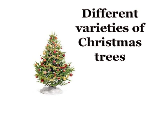 28 Best How Many Types Of Christmas Trees Are There