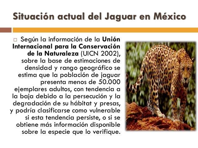 Especie en peligro de extinciu00f3n: El Jaguar