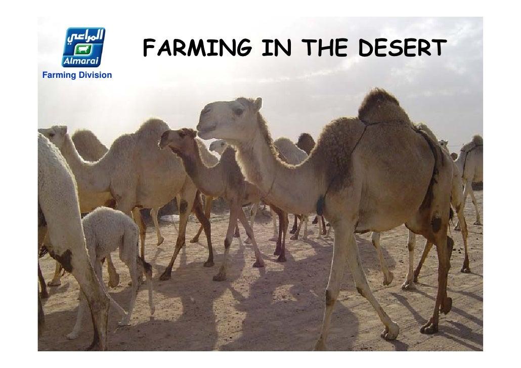 FARMING IN THE DESERTFarming Division