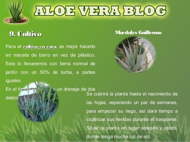 9. Cultivo                                       Macdalys GuillermoPara el cultivo en casa, es mejor hacerlo              ...