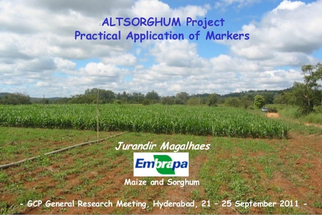 : ALTSORGHUM ProjectPractical Application of MarkersJurandir MagalhaesMaize and Sorghum- GCP General Research Meeting, Hyd...
