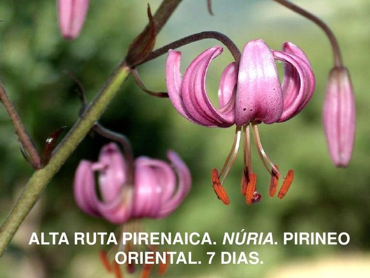 ALTA RUTA PIRENAICA. NÚRIA. PIRINEO ORIENTAL. 7 DIAS.<br />