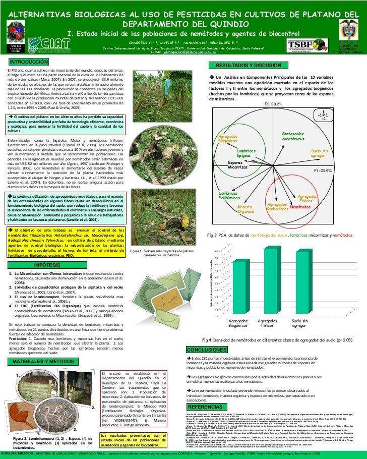 poster63: Alternativas biologicas al uso de pesticidas en cultivos de platano del departamenteo  del Quindio I. Estado inicial de las poblaciones de nemátodos y agentes de biocontrol