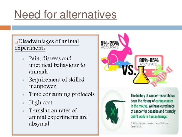 advantages and disadvantages of animal testing essay   homework        advantages and disadvantages of animal testing essay   image