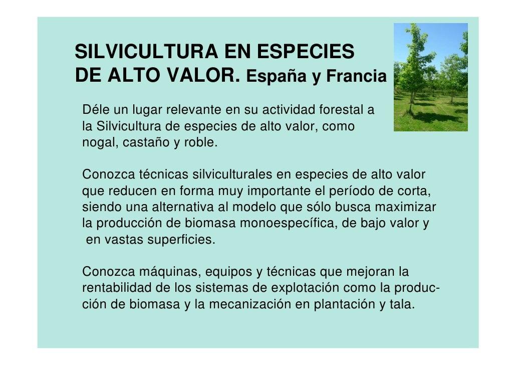 SILVICULTURA EN ESPECIES DE ALTO VALOR. España y Francia Déle un lugar relevante en su actividad forestal a la Silvicultur...
