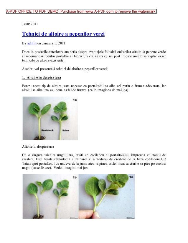 Altoire pepene verde