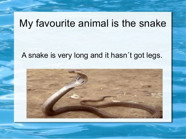 My favourite animal is the snake A snake is very long and it hasn´t got legs.