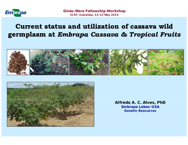Ginés-Mera Fellowship Workshop                   CIAT, Colombia, 12-13 May 2010      Current status and utilization of cas...