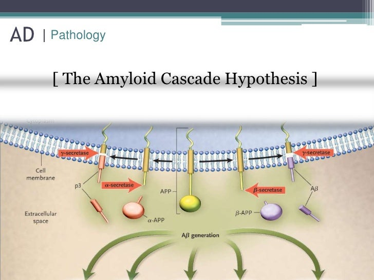 The amyloid hypothesis of Alzheimer's disease