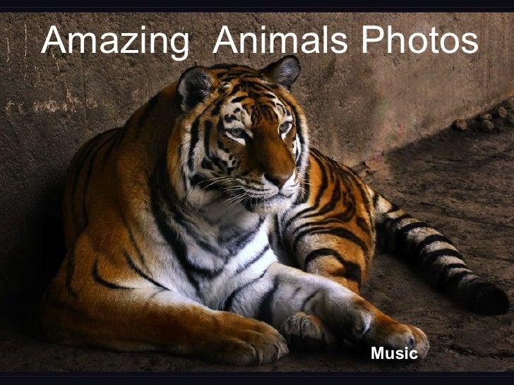 Amazing  Animals Photos Music