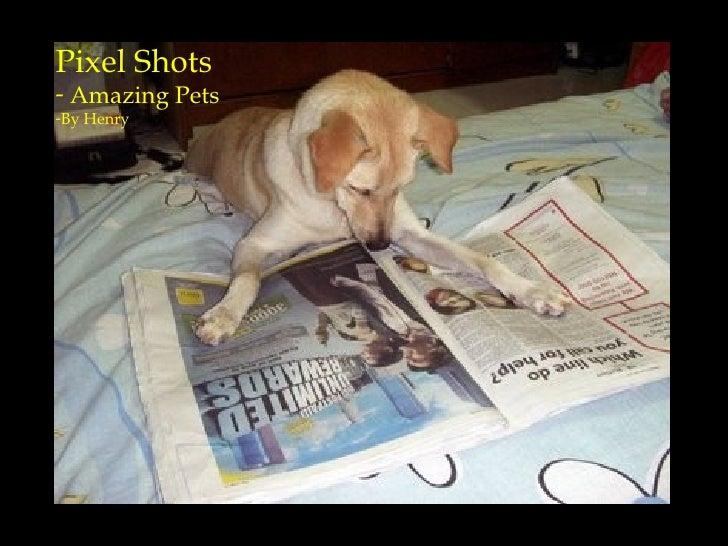 <ul><li>Pixel Shots  </li></ul><ul><li>Amazing Pets  </li></ul><ul><li>By Henry </li></ul>