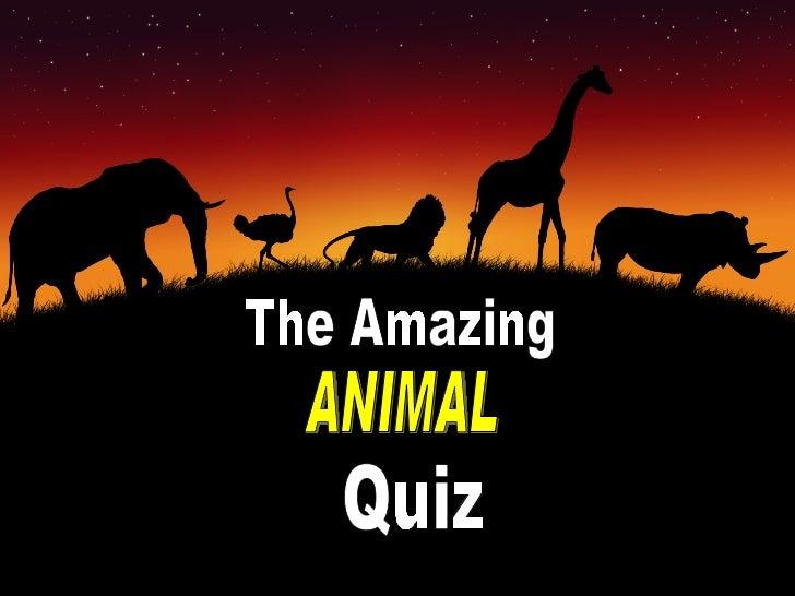 The Amazing ANIMAL Quiz