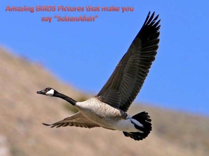 Amazing birds 2