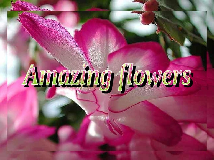 Amazing Flowers