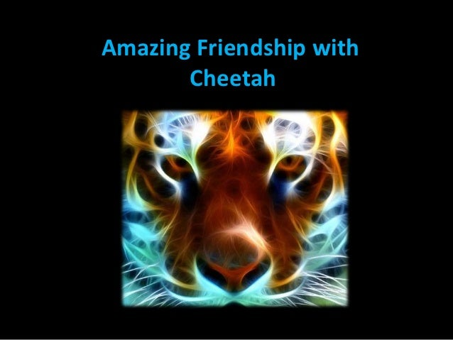 Amazing Friendship with       Cheetah