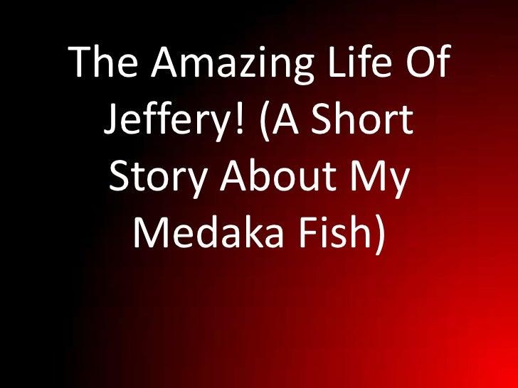 The Amazing Life Of Jeffery! (A Short Story About My Medaka Fish)<br />