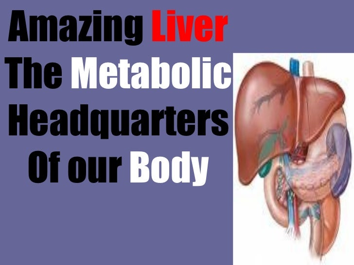 Amazing  Liver The  Metabolic Headquarters Of our  Body
