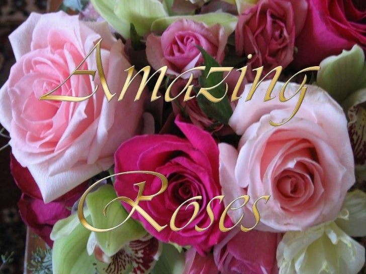 Amazing roses